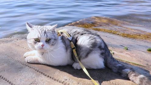 我能想到最浪漫的事,就是带猫咪去看海