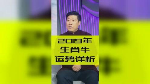 2019年十二生肖运势之牛:面对挑战迎难而上!
