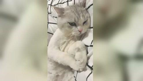 铲屎的你烦不烦,小可爱不是我还能是谁呀,人家想要睡觉了