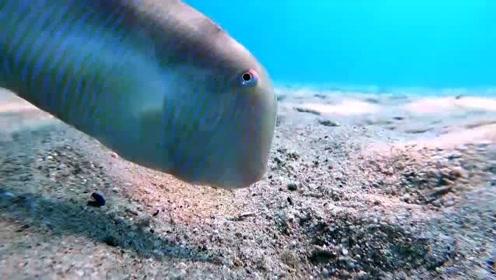 炫技!法男子拍到离鳍鱼闪电速度钻入沙子不见踪影