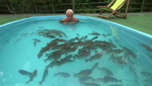 食人鱼有多恐怖?老人跳进装有百条食人鱼泳池