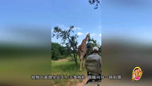 黄渤探访南非大草原 近距离接触长颈鹿新鲜感满满