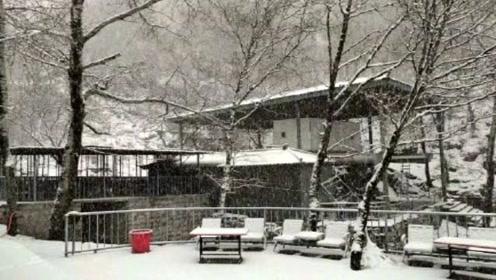 石家庄驼梁景区四月飘着大雪 地面一片白茫茫