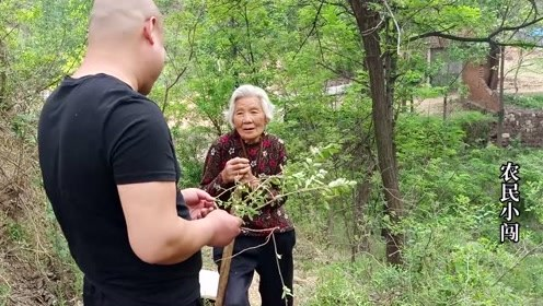 农村80岁老奶奶每天上山采药,背后的原因令人赞叹,小闯佩服