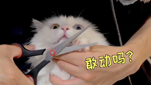 猫咪毛上沾了臭臭,所以准备给猫剪毛毛,还把猫惹的生气气
