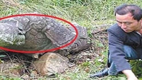 """男子爬山游玩,意外发现一只""""乌龟"""",专家看后直言:你多少钱卖"""