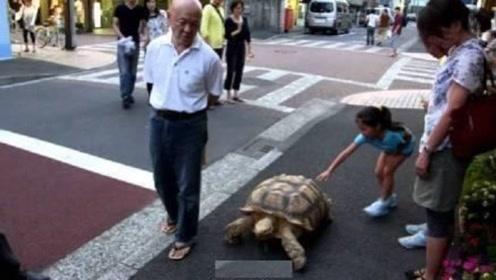 老人30年前捡到小乌龟,如今天天陪老人散步,孙女回家看傻眼了