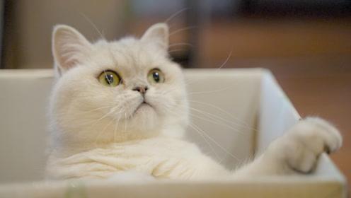猫加纸箱等于治愈大礼包,高考结束来放松一下吧!