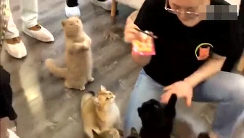 猫:求求你了,看看我吧