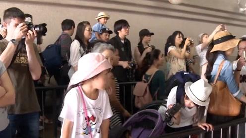 日本大熊猫过两岁生日,场面轰动全国,网友:当红流量最高的明星