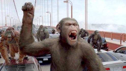 猩猩头领智商超高,利用兵法,让猩猩部队绕道警察背后袭击!