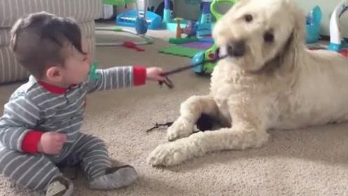 狗子也怕熊孩子,狗狗:小主人求放过,可熊孩子非是不听啊