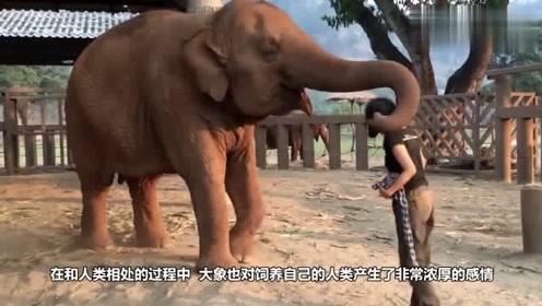 饲养员帮大象17年, 被攻击时大象挺身而出 我来保护你