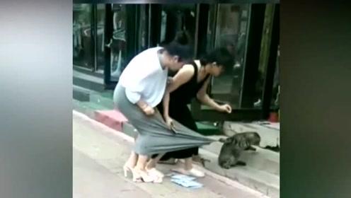 猫咪老板花了多少钱请你,这么拼命的拉生意!