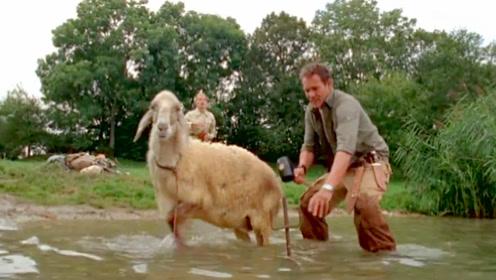 湖里出现怪物,饲养员用一头绵羊当诱饵,结果浮出一条巨型鳄鱼!