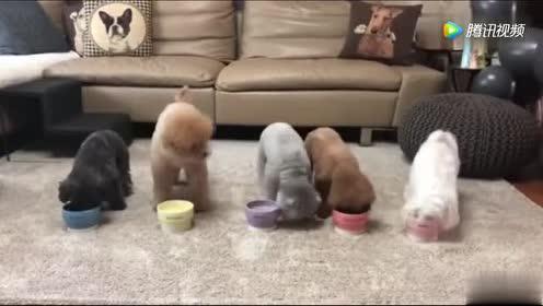 五只小可爱一起吃饭饭!画面太美啦!