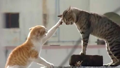 两只猫咪大打出手,一把抓住对方是猫头,猫:疼到怀疑人生!