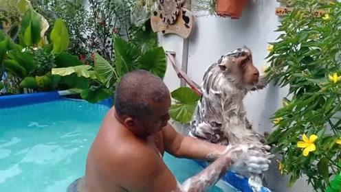 外国大叔把猴子当儿子,每天为它洗头洗澡
