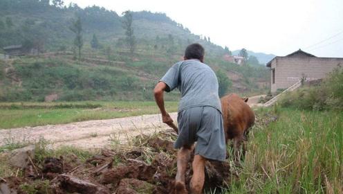 农村看相俗语:上身长坐中堂 下身长走忙忙,你们有道理吗?