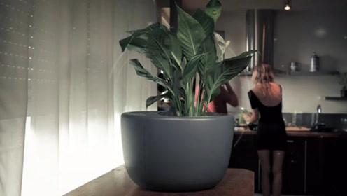 用上这高科技花盆,能增强盆栽净化空气的能力
