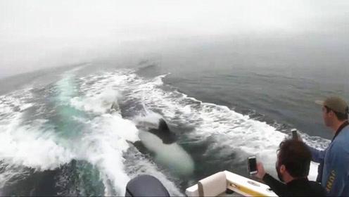 杀人鲸狂追渔船 下秒举动惊呆众人