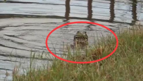 """男子河塘钓鱼,意外发现""""青蛙"""",看清""""尺寸""""后吓得转身就跑!"""