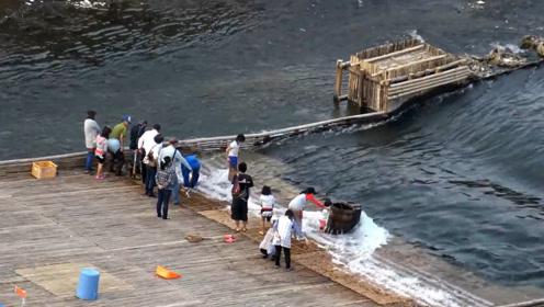 把竹排铺到河流上,过往大鱼全部留下,上去就可以随便捡