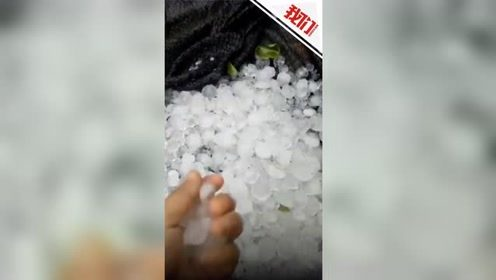 山东多地遭遇冰雹致庄稼倒地 不少农民受灾损失惨重