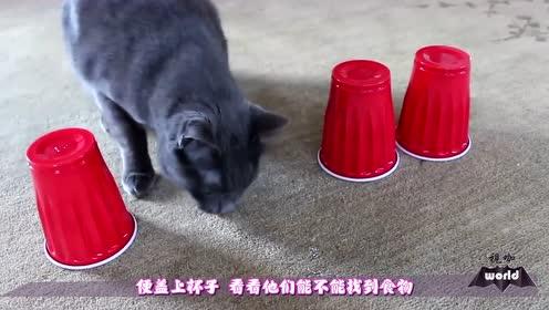 猫聪明还是狗更胜一筹?看看老外的实验,不敢相信