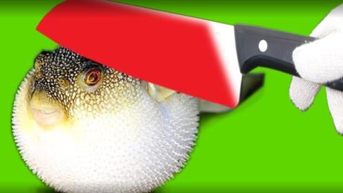 1000℃菜刀切河豚会发生什么?要不是视频,难以置信