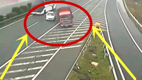 奥迪高速任性变道,害惨后面两辆大货车,司机的做法令人愤怒!