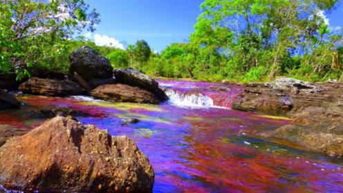 """世界上最梦幻的河流,被称为""""流动的彩虹"""",一年只出现几个月"""