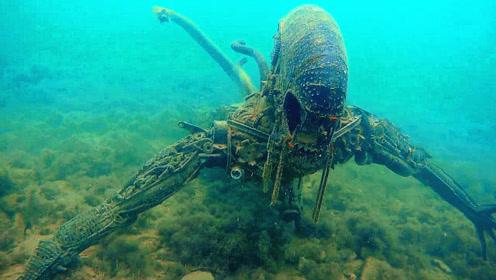 男子潜水海底发现一只异形,靠近一看,才发现事情并不简单