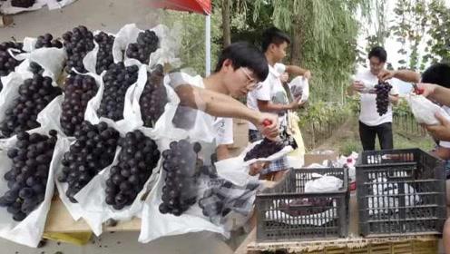 """95后大学生当""""新农民""""组团卖葡萄,日售2400斤仅睡5小时"""