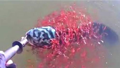 2条大鱼被捞上岸后,小伙看见鱼嘴吐出的东西,吓的扔回河里!