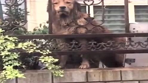 一只会指路的狗狗,简直成精了,网友:这智商不送去上学可惜了!