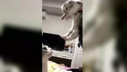 喵妈妈:乖,快到妈妈怀里来