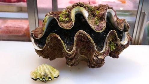 价值1000元的大贝壳,看厨师如何处理,撬开壳的瞬间看馋了