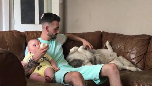 男主人给小宝宝喂奶,阿拉不停的撒娇,谁还不是个宝宝了!