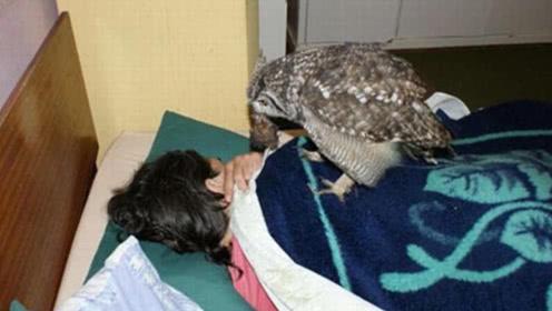 男子勇救受伤猫头鹰,10年来,猫头鹰给他带来各种礼物!