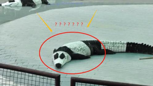 那些没租到大熊猫的国家是怎么做的?鳄鱼:我的内心是拒绝的