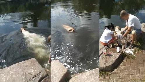 埋汰!男子公园给爱犬搓澡,留下一池泡沫