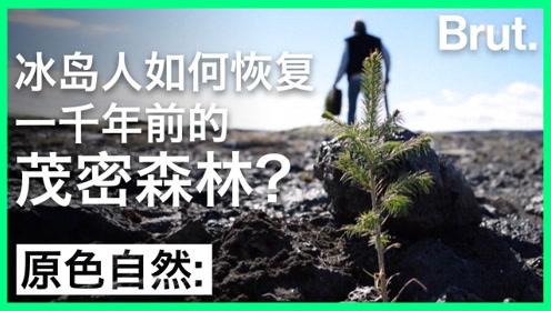 冰岛人如何恢复一千年前的茂密森林?