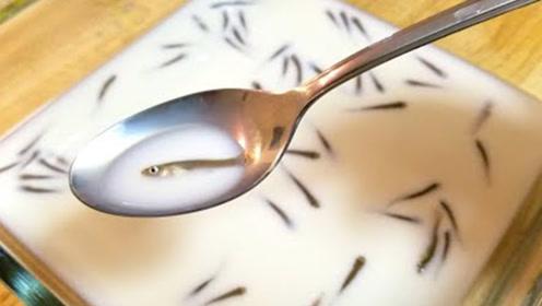 老外趣味实验:将鱼放牛奶里会有牛奶味吗?下一秒令人抓狂!