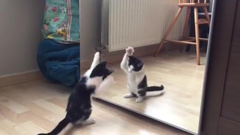 猫咪照镜子,沉迷与自己的美色不能自拔,对着镜子嗨起来