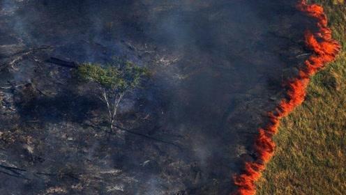 亚马逊遭遇大火后,热带雨林一旦消失,地球将面临什么危机?