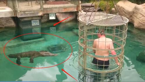 老外作死挑战,在水底和鳄鱼亲密接触?鳄鱼:我刚刚吃饱