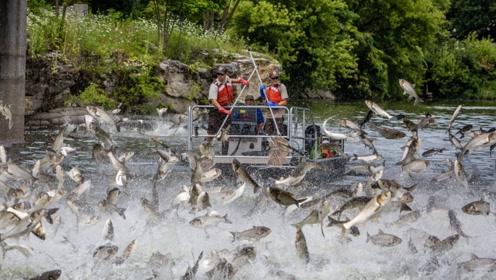 为什么即将要地震时,鱼儿就纷纷跳出水面?这是地震前兆吗