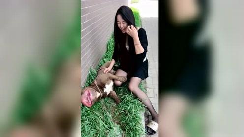 小姐姐养了一只恶霸犬,没想到这么调皮,一看就是惯的了