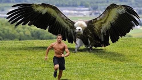 """世界上最""""凶悍""""的鸟,身长3米最爱吃""""狮子"""",至今没有天敌!"""